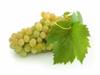 bílá vína BIB 20 l